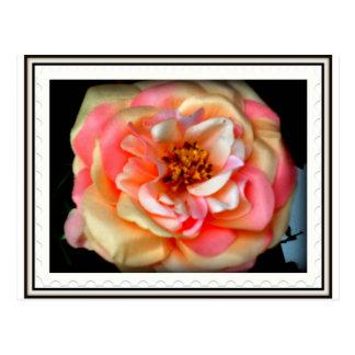 roseyposey postcard