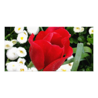 Rosy Red Tulip Customized Photo Card
