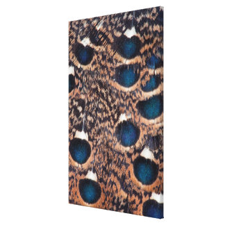 Rothschild Peacock-Pheasant Feathers Canvas Print