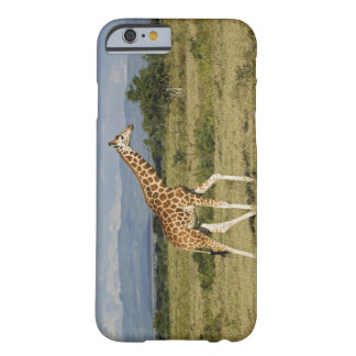 Rothschild's Giraffe, Giraffa camelopardalis Barely There iPhone 6 Case