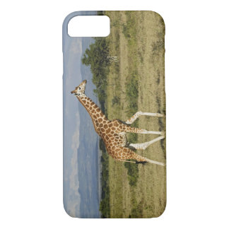 Rothschild's Giraffe, Giraffa camelopardalis iPhone 8/7 Case