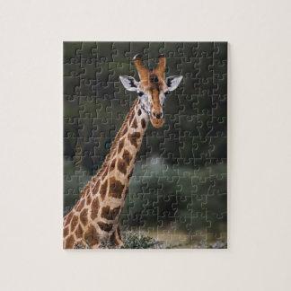 Rothschild's Giraffe, Lake Nakuru National Park, Jigsaw Puzzle
