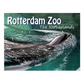 Rotterdam Zoo Diergaarde Blijdorp Swimming Seal Postcard