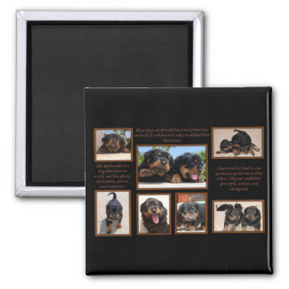 Rottweiler Collage with Text Square Magnet