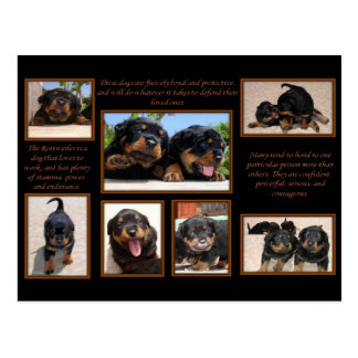 Rottweiler Collage with Text Postcard