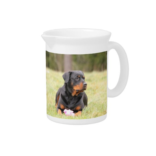 Rottweiler Dog Beverage Pitcher