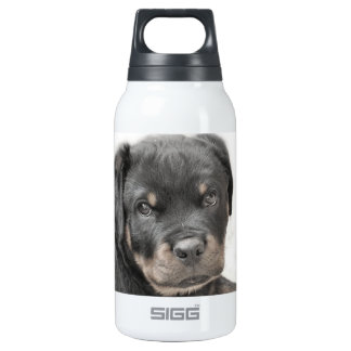 Rottweiler dog insulated water bottle