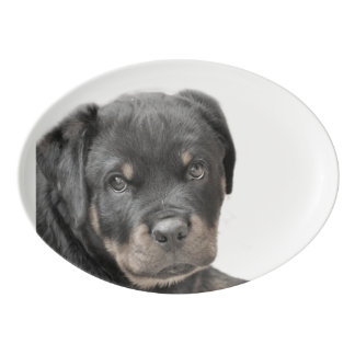 Rottweiler dog porcelain serving platter