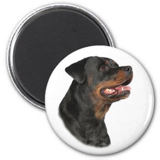 Rottweiler head magnet