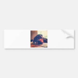 Rottweiler Memories Bumper Sticker