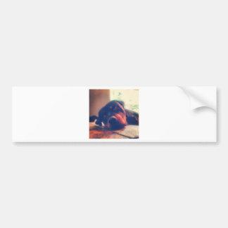 Rottweiler Memories Bumper Stickers