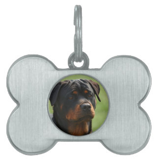 Rottweiler Pet Name Tag