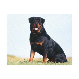 Rottweiler Portrait Wrapped Canvas Stretched Canvas Print