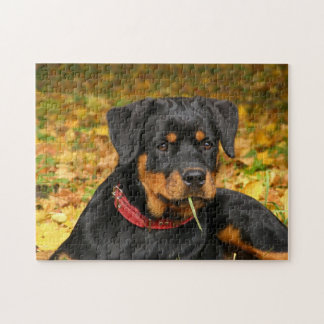 Rottweiler Pup Lying On The Ground In Forest Jigsaw Puzzle