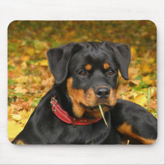 Rottweiler Pup Lying On The Ground In Forest Mouse Mat