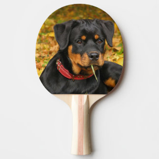 Rottweiler Pup Lying On The Ground In Forest Ping Pong Paddle