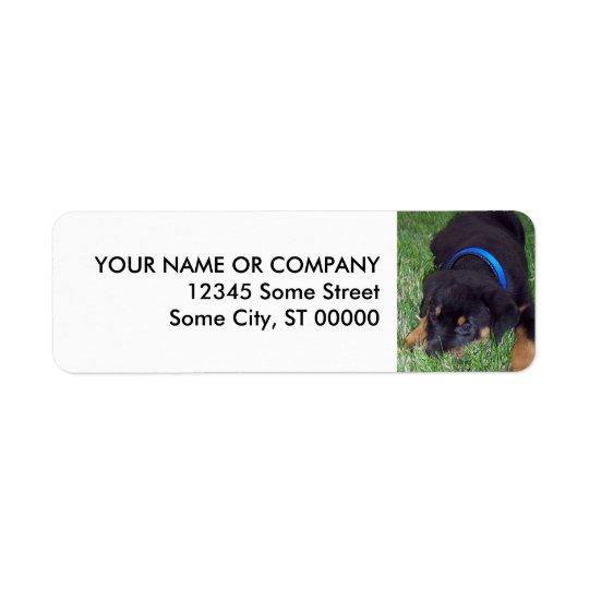 rottweiler pup. return address label