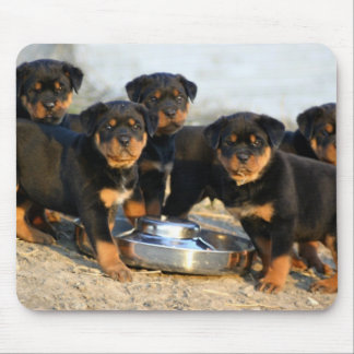 rottweiler puppies mouse pad
