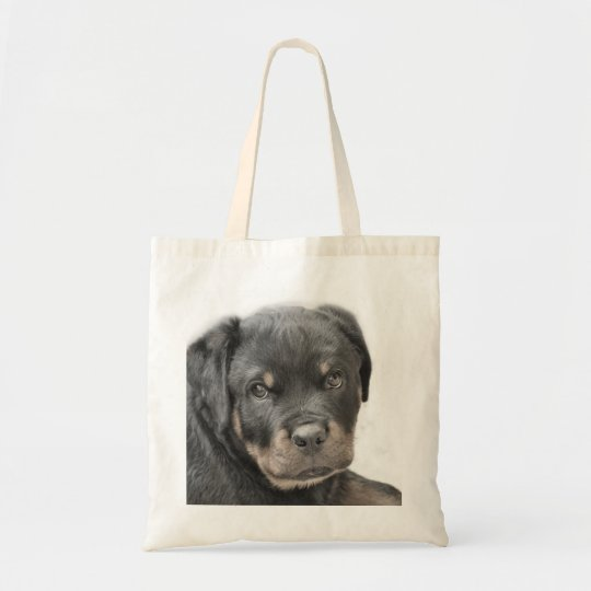 Rottweiler puppy