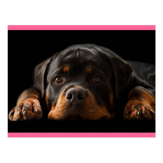 Rottweiler Puppy Dog Greeting Postcard - Blank