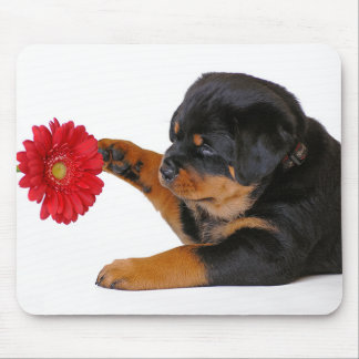 Rottweiler  Puppy Dog with Gerbera Daisy  Mousepad