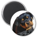 Rottweiler puppy fridge magnet