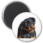 Rottweiler puppy fridge magnets