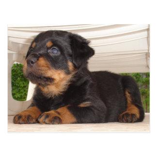 Rottweiler Puppy Hiding Under a Chair Postcard