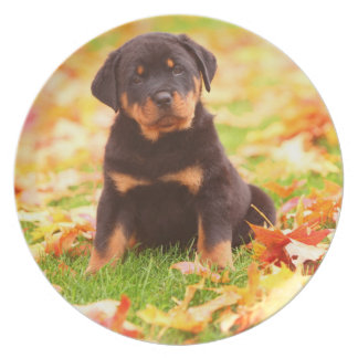 Rottweiler Puppy Sitting In Autumn Leaves Dinner Plate