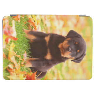 Rottweiler Puppy Sitting In Autumn Leaves iPad Air Cover