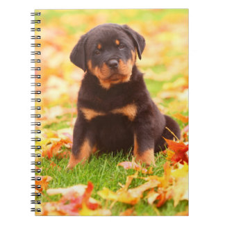 Rottweiler Puppy Sitting In Autumn Leaves Notebooks