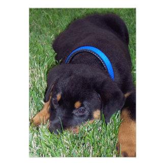 rottweiler pups custom invitation
