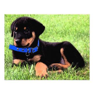 rottweiler pups announcements