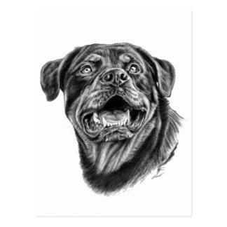 Rottweiler Sketch Postcard