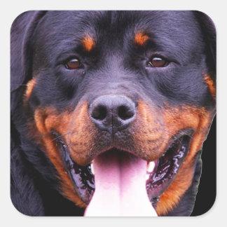 """Rottweiler"" Square Sticker"