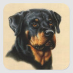 Rottweiler Square Stickers