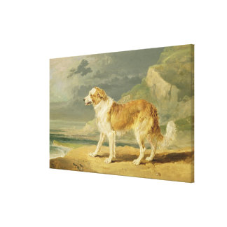 Rough-coated Collie, 1809 (oil on board) Canvas Print