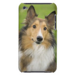 Rough Collie, dog, animal Barely There iPod Covers