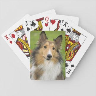 Rough Collie, dog, animal Card Decks