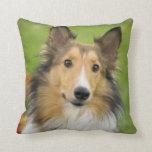 Rough Collie, dog, animal Cushions