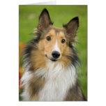 Rough Collie, dog, animal Greeting Card