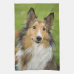 Rough Collie, dog, animal Hand Towels