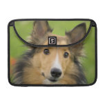Rough Collie, dog, animal MacBook Pro Sleeves