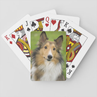 Rough Collie, dog, animal Poker Deck