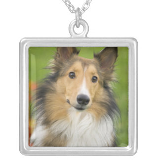 Rough Collie, dog, animal Silver Plated Necklace