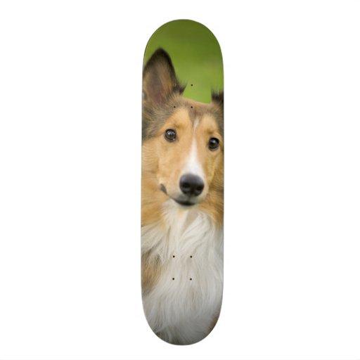 Rough Collie, dog, animal Skate Deck