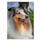 Rough collie dog beautiful blank greeting card