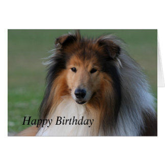 Rough collie dog beautiful custom birthday card