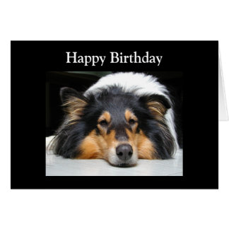 Rough Collie dog beautiful photo birthday card