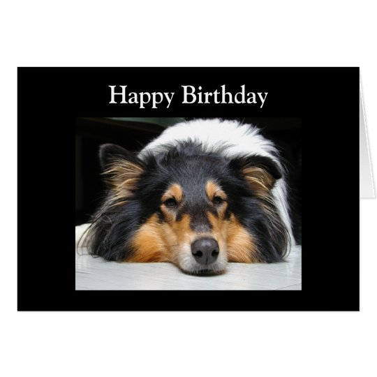 Rough Collie dog beautiful photo birthday card